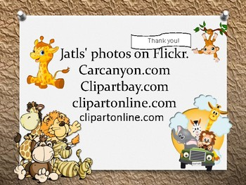 baby animal certificates