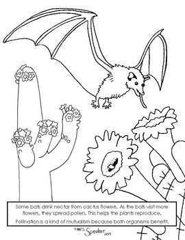 Bat And Cactus Flower Pollinator Coloring Page
