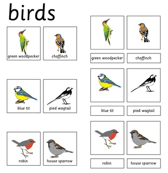 classified cards of birds