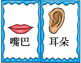 Mandarin Chinese body parts flashcards classroom use size