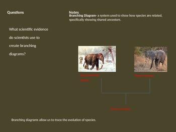 branching diagram presentation