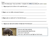 cause and effect hippos