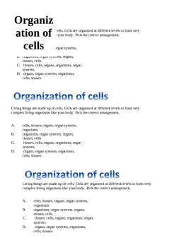 cellular organization warm-up