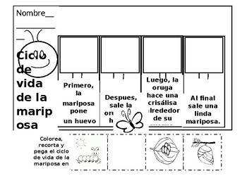 Ciclo De Vida De La Mariposa Worksheets Teaching Resources Tpt