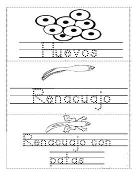 ciclo de vida de una rana