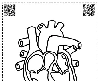 circulatory body system heart coloring foldable interactive notebook QR jr high