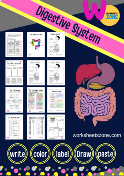 Digestive System Coloring Sheet By Worksheetzone Tpt