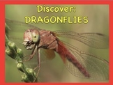 dragonflies powerpoint and ebook