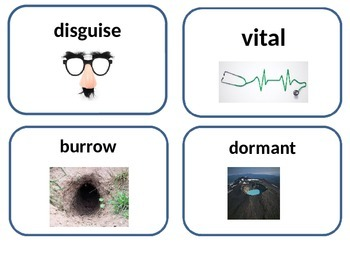 editable amazing bird nest amazing words and vocabulary word cards