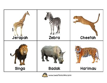flashcard hewan