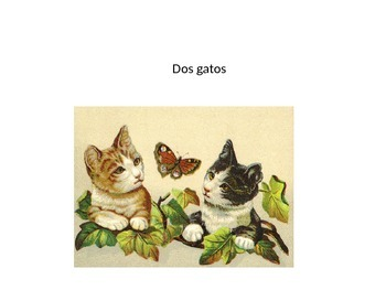 gato, pez, come