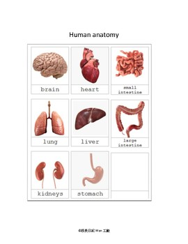 human anatomy with realistic images 3 part card