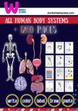 human anatomy workbook