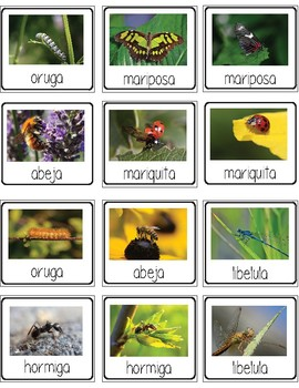 insectos / insects