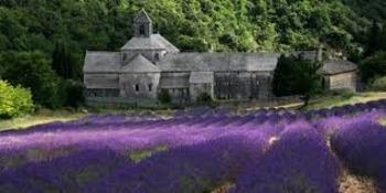 l'Abbaye Notre Dame de Senanque: Lavender Fields of France