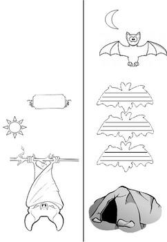 lapbook bat