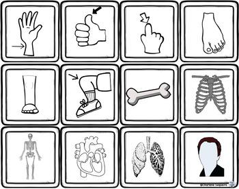 le vocabulaire thématique - les parties du corps