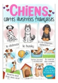 les CHIENS - French flash / picture cards dogs /  vocabula