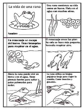 libro ciclo de vida de la rana