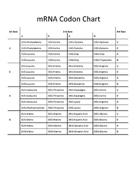 Rna Codon Chart Canabi