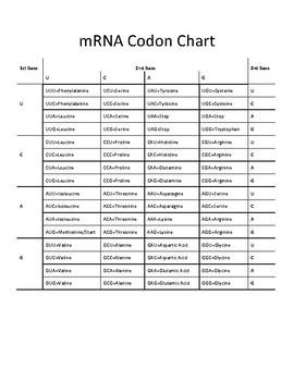 Mrna Codon Chart By The Biology Lab Teachers Pay