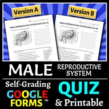 Male Reproductive System Quiz - Two Versions {Editable}