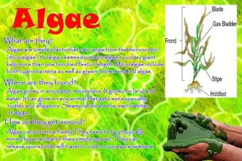 microorganisms info
