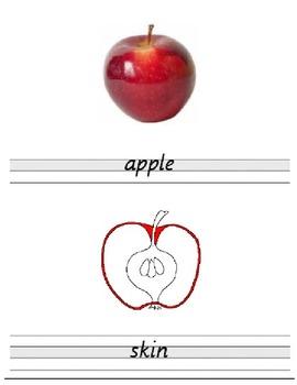 montessori parts of----apple