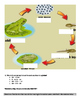 myOn book: The Life Cycle of Amphibians