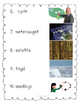 "EngageNY Kindergarten ""Seasons and Weather"" Domain Alternative Assessment"