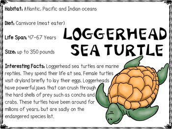 ocean animals reading comprehension, fact card and vocabulary