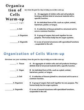 organization of cells warm-up