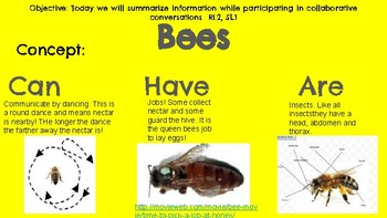 oviparous animal unit. all about bees