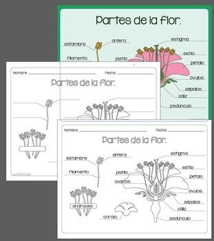 Partes de la flor