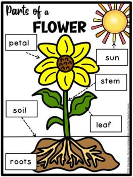 parts of a flower(FREE- FREEDBACK CHALLENGE)