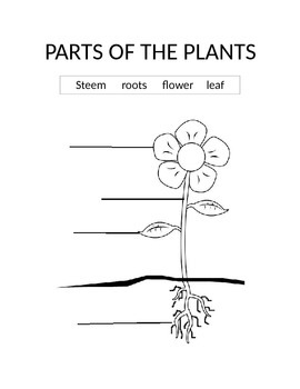 parts of the plant