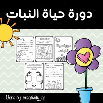 plant life cycle / دورة حياة النبات للأولاد
