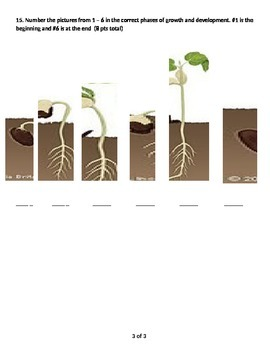 plant life cycle and basic needs test