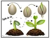 plant life / cycle de vie de la plante