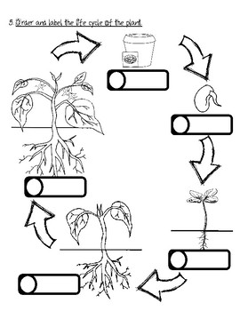 plant unit test (needs, plant parts, plant part functions, plant life cycle)