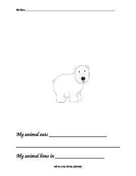 polar bear reports