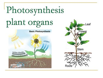 power point photosynthesis lesson