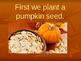 pumpkin week for little learners