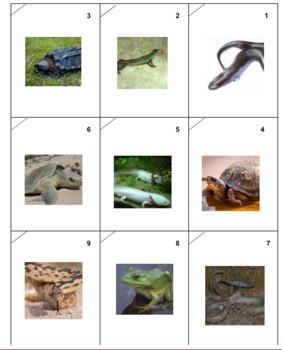 reptiles and Amphibians Photo Safari Gaame
