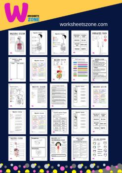 respiratory system worksheet by worksheetzone   TpT