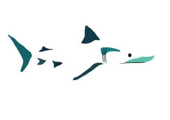 shark image/ graphic