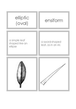 simple leaves: 3-part cards