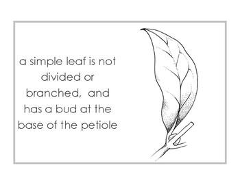 simple leaves booklet