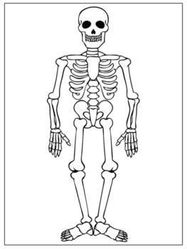 picture about Skeleton Cut Out Printable identify Skeleton Puzzle Worksheets Coaching Materials TpT