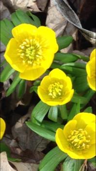spring /r/ sentences